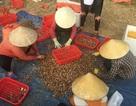 Ngư dân Hà Tĩnh phấn khởi vì trúng đậm sò lụa