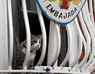Bí ẩn tung tích mèo cưng của ông chủ WikiLeaks
