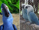 Điểm lại những loài động vật đáng chú ý đã tuyệt chủng trong năm qua!