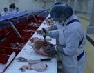 Tổ hợp chế biến thịt ở Hà Nam tạm ngừng cung cấp thịt lợn