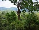 Rơi từ độ cao 100m, du khách Canada thiệt mạng khi chơi trượt zipline ở Thái Lan