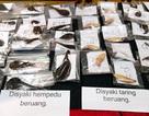 Malaysia bắt 2 người Việt Nam nghi săn trộm gấu, hổ quý hiếm