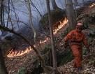 Nướng thịt gây cháy rừng, 2 nam sinh Italy bị phạt hơn 30 triệu USD