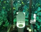 Cửa hàng cafe chi hơn 6,6 tỉ lắp đặt bể cá khổng lồ quanh nhà vệ sinh
