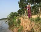Sạt lở đe dọa hàng chục hộ dân bên bờ sông Thạch Hãn
