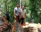 Xác định 2 đối tượng xẻ thịt rừng phòng hộ Đăk Mi