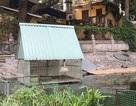 Hà Nội: Đàn thiên nga đẻ gần 20 quả trứng ở hồ Thiền Quang