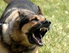Bé trai 14 tuổi tử vong do chó dại cắn