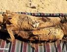 Phát hiện lăng mộ đầy xác ướp ở thành phố Aswan, Ai Cập