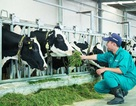 """Mô hình """"Resort"""" bò sữa đạt chuẩn Global G.A.P – Chìa khóa tạo dựng niềm tin của người tiêu dùng với sản phẩm sữa tươi"""