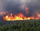 Nắng nóng bất thường, 20 điểm cháy rừng phát sinh 1 ngày