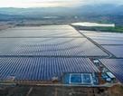 Cụm nhà máy điện mặt trời 330mwp lớn nhất Đông Nam Á chính thức hòa lưới điện quốc gia