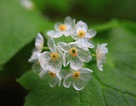 Ngỡ ngàng với vẻ đẹp của loài hoa trắng chuyển sang trong suốt khi gặp mưa