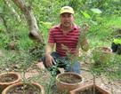 Kỹ sư về trồng chanh móng tay, nhánh bé tý bán 350 ngàn