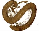 Phát hiện hoá thạch rết cổ đại 99 triệu năm tuổi