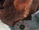 Quảng Nam: Choáng với cây nấm 70kg, trả giá 60 triệu chưa bán