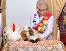Con mèo gây xôn xao dư luận trong lễ đăng quang của Nhà vua Thái Lan