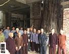"""Cả làng """"kêu cứu"""" vì cây bồ đề hàng trăm tuổi bị xâm hại"""