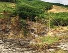 Bắt tạm giam nguyên Trưởng ban và 2 cán bộ Ban quản lý rừng phòng hộ