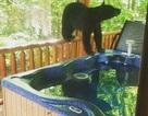 Du khách hết hồn khi thấy gấu đen ngâm mình trong bồn tắm nhà nghỉ
