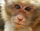 Các nhà khoa học đã có thể sử dụng AI để khám phá não khỉ