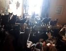 Giải cứu hơn 300 chú mèo bị nhốt trong một căn hộ nhỏ xíu