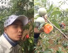 Nhóm phượt thủ gây phẫn nộ khi phí phạm trái cây trong vườn