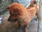 Cà Mau: Chó chạy rông cắn 6 người rồi... chết