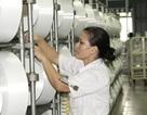Nhà máy xơ sợi Đình Vũ tăng công suất sản xuất sợi DTY lên 900 tấn/tháng