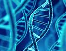 Phát hiện người đàn ông có DNA lâu đời nhất ở Bắc Mỹ