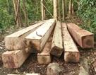 Hiệp định chống khai thác gỗ bất hợp pháp chính thức có hiệu lực từ 1/6