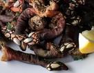 Loại ốc biển xấu xí 3 triệu đồng/con, nhà giàu muốn mua không có