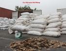 Phát hiện hơn 8 tấn vảy tê tê nhập lậu về cảng