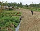 Nhà máy đường bị phạt gần nửa tỷ đồng vì xả nước thải bẩn ra môi trường