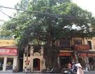 """Cây đa cổ thụ với bộ rễ """"khổng lồ"""" có tuổi đời hàng trăm năm ở Đình Cổ Vũ"""