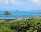 """Các nhà khoa học khám phá ra """"siêu san hô"""" tự phục hồi ở Hawaii"""