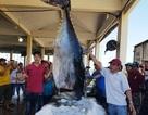 """2 con cá ngừ """"siêu khủng"""" nặng gần 600kg được bán với giá """"rẻ bèo"""""""