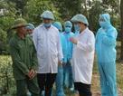 Thanh Hóa: Phó Chủ tịch huyện bị phê bình do để dịch tả lợn lây lan nhanh chóng