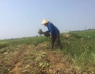 Hà Tĩnh: Một người đàn ông tử vong do sốc nhiệt