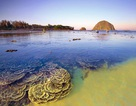 Nhiều rạn san hô đẹp ở Phú Yên đang bị khai thác triệt để