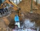 Xử nghiêm hành vi che giấu hoặc khai khống lợn nhiễm dịch tả châu Phi để trục lợi