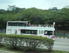 Sắp có tuyến xe 2 tầng mui trần chở khách du ngoạn quanh TPHCM