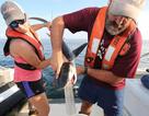 Sở thích ăn thịt… chim kì lạ của cá mập hổ