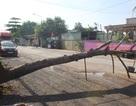 Người dân dựng rào chặn xe quá tải