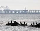 Ukraine tìm kiếm quy chế quốc tế cho eo biển Kerch