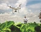 Những giải pháp và công nghệ nổi bật của Bayer giúp nông nghiệp phát triển