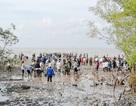 Bộ Tài nguyên và Môi trường phát động trồng rừng ven biển Bạc Liêu