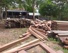 Xác minh nguồn gốc số gỗ cất giấu trong trụ sở UBND xã