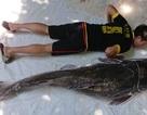 """Ngư dân bắt được cá lăng đuôi đỏ """"khủng"""" trên sông Sêrêpốk"""
