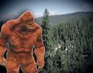 Nguồn gốc thực sự các mẫu lông của Người tuyết mới được FBI tiết lộ
